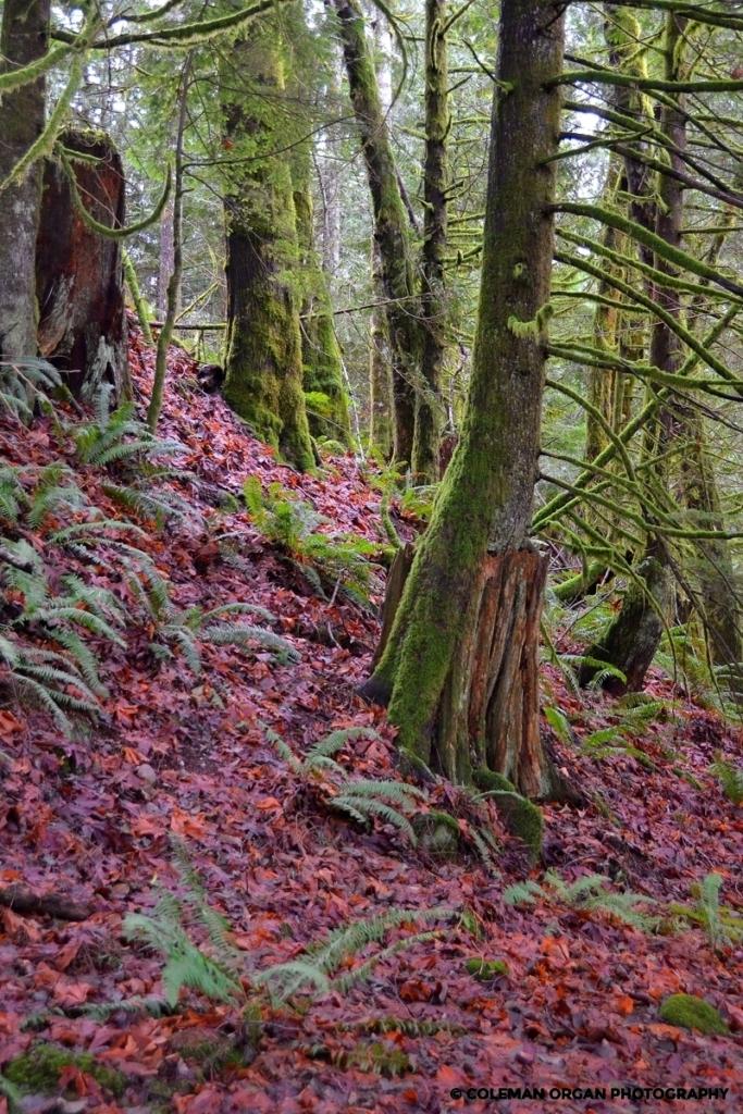 Seattle Leaves